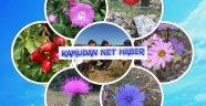 Doğa Kaşifi eTwinning Projesi